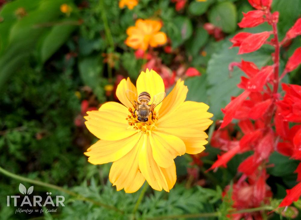 cambray-con-abeja